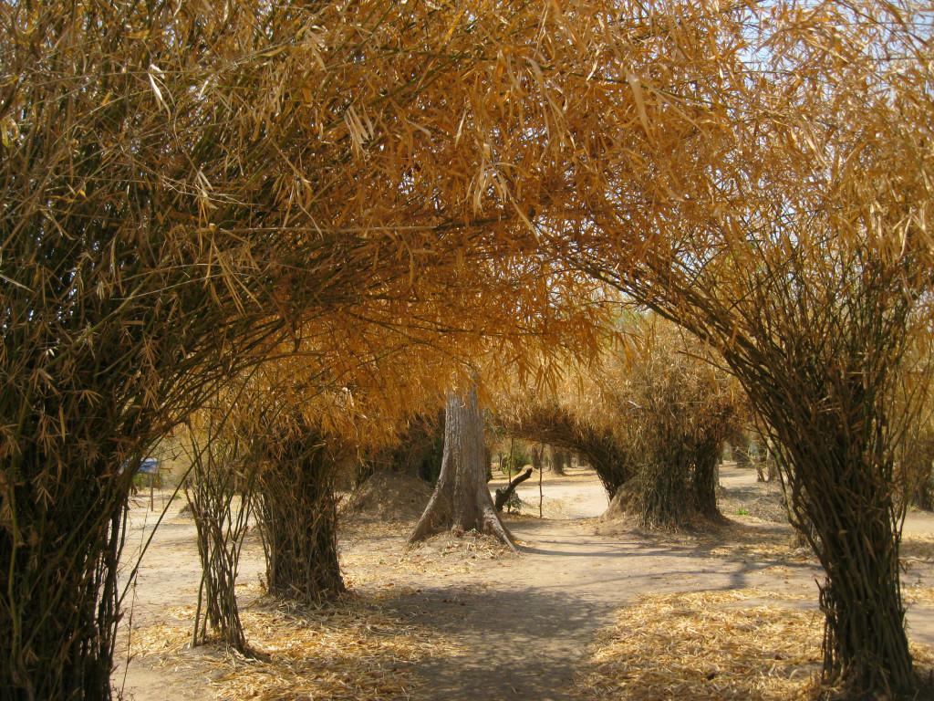 IMG_3285 Tree tunnel